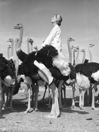 Norman Parkinson, Wenda and Ostriches, Vogue, South Africa, 1951